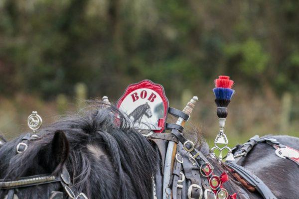 Horse ploughing Holywood